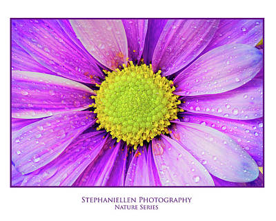 Purple Daisy Poster by Stephanie Hayes