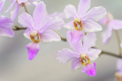 Purple Delight. Orchid Macro Poster by Jenny Rainbow