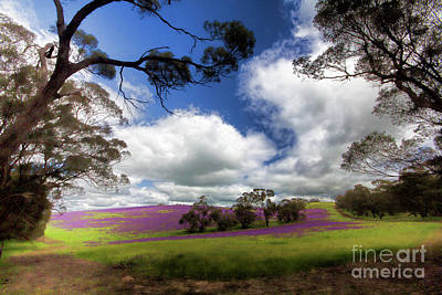 Poster featuring the photograph Purple Fields by Douglas Barnard