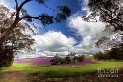 Purple Fields Poster by Douglas Barnard