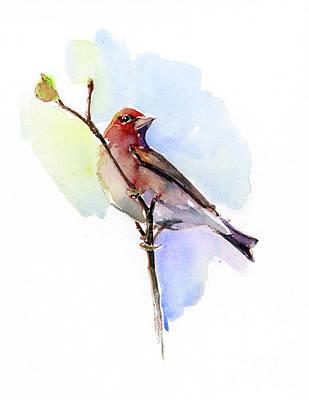 Purple Finch Poster