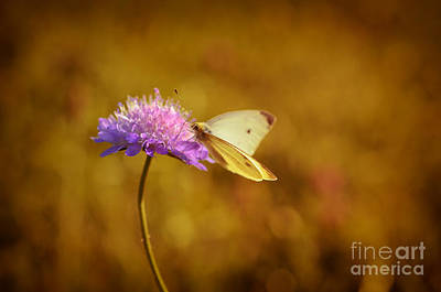 Purple Flower And Butterfly Poster