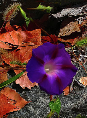 Purple Flower Autumn Leaves Poster