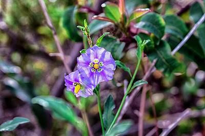 Purple Flower Family Poster