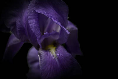 Poster featuring the photograph Purple Flower by Ryan Photography