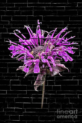 Purple Flower Under Bricks Poster