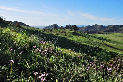 Poster featuring the photograph Purple Flowers And Green Hills Landscape by Matt Harang