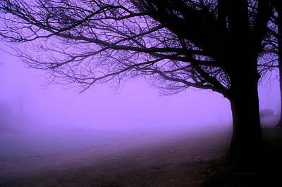 Purple Haze December Fog By The Sleepy Pin Oak Pa Poster