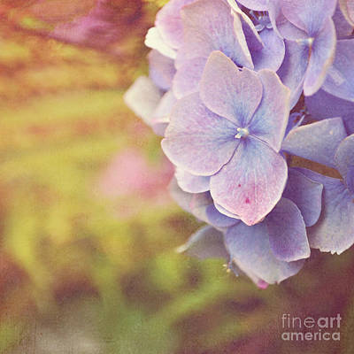Poster featuring the photograph Purple Hydrangea by Lyn Randle