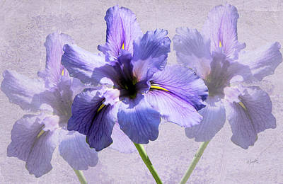 Purple Irises Poster by Rosalie Scanlon