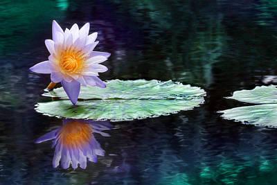 Purple Lotus Reflection Poster by Lori Deiter