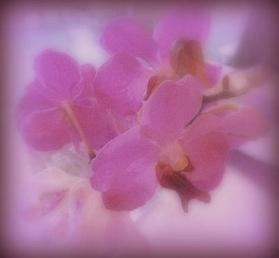 Purple Orchids Poster by Kay Novy