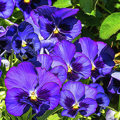 Purple Pansies In Morning Light Poster