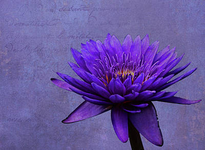 Poster featuring the photograph Purple Passion by Judy Vincent