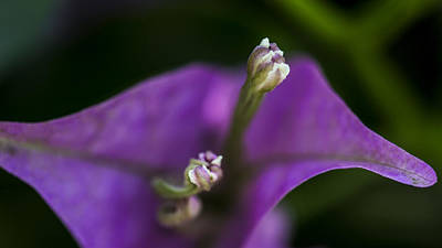 Poster featuring the photograph Purple Rest Flower by Paula Porterfield-Izzo