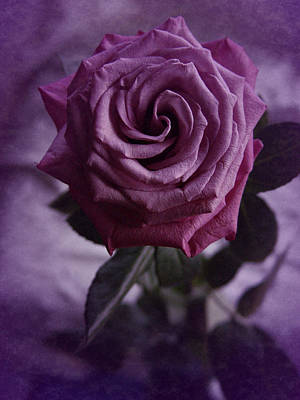 Poster featuring the photograph Purple Rose Of December by Richard Cummings