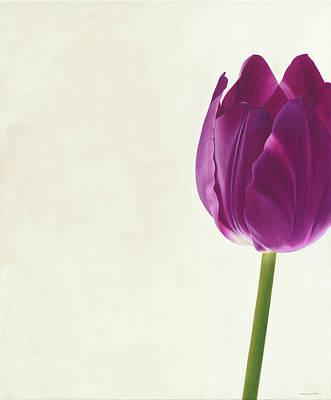 Purple Tulip Poster by Rita Magos
