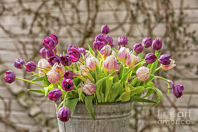 Poster featuring the photograph Purple Tulips In A Bucket by Patricia Hofmeester