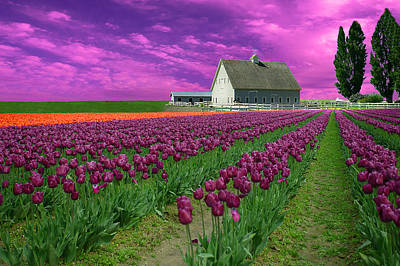 Purple Tulips With Pink Sky Poster by Jeff Burgess