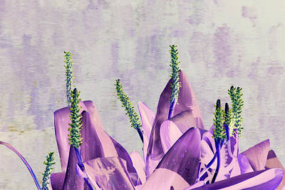 Purple Water Plant Poster