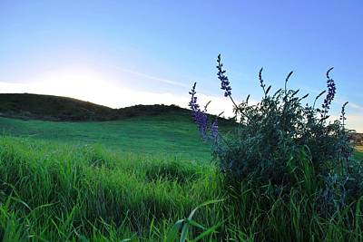 Poster featuring the photograph Purple Wildflowers In Beautiful Green Pastures by Matt Harang