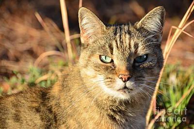Purr-fect Kitty Cat Friend Poster
