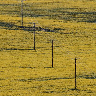 Pylons In Oilseed Field Poster