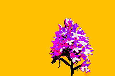 Orange Pyramid Orchid  Poster