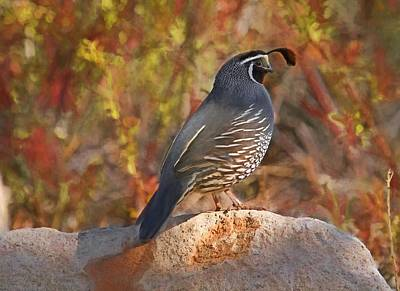 Quail On The Rocks Poster by Donna Kennedy
