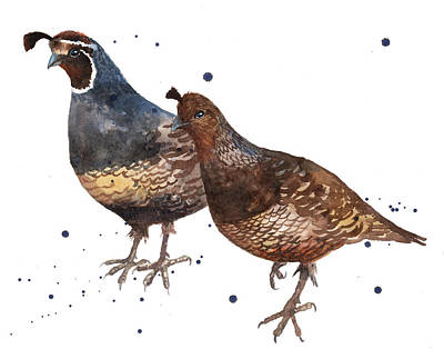 Quail Painting Poster by Alison Fennell