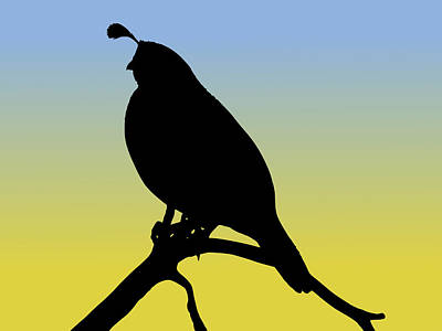 Quail Silhouette At Sunrise Poster