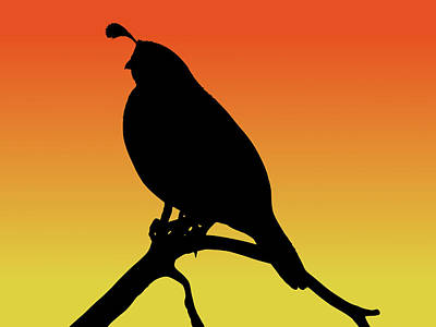 Quail Silhouette At Sunset Poster