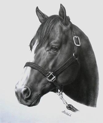 Quarter Horse Portrait Poster by Margaret Stockdale