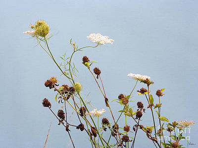 Queen Anne's Lace And Dried Clovers Poster