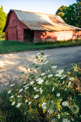 Queen Anne's Lace By The Barn Poster