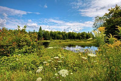 Poster featuring the photograph Queen Anne's Lace On The Moose River by David Patterson