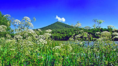 Queen Anne's Lace, Peaks Of Otter  Poster