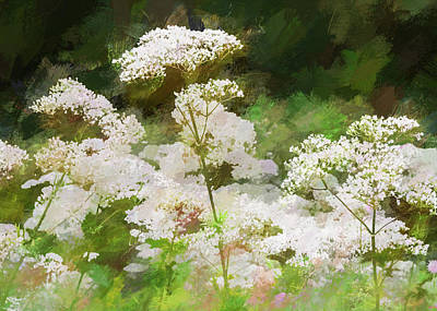 Poster featuring the photograph Queen Annes Lace. by Rob Huntley