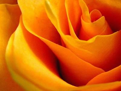 Queen Rose Poster