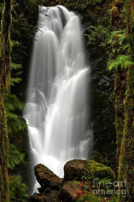 Quinault Rainforest Ghost Poster by Adam Jewell