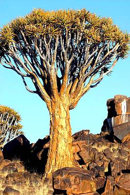 Poster featuring the photograph Quiver Tree In Namibia by Riana Van Staden