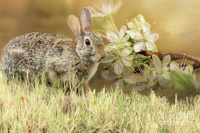 Eastern Cottontail Rabbit In Grass Poster