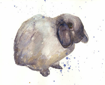 Rabbit Print Poster by Alison Fennell