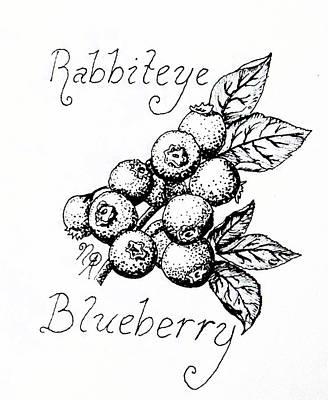 Rabbiteye Blueberry Poster