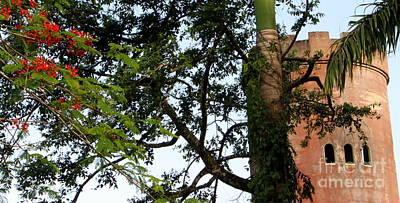 Rain Forest Puerto Rico Yokahu Observation Tower Flamboyant Tree Poster