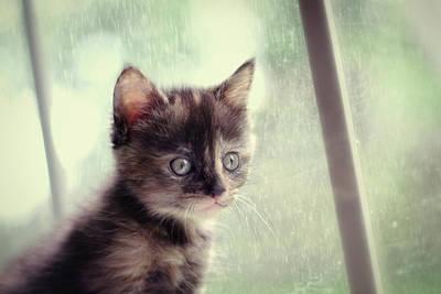Rain Rain Go Away Poster by Amy Tyler