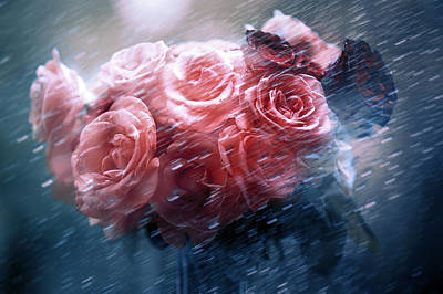 Rain Red Roses Nostalgia Poster by Jenny Rainbow