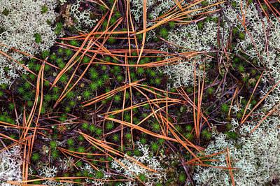 Rain Study#15, Pine Barrens Poster by Steve Gravano