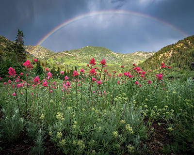 Rainbow And Wildflowers Poster