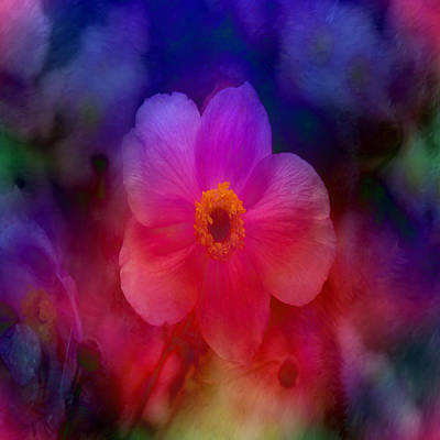 Rainbow Anemone Poster by Lena Photo Art